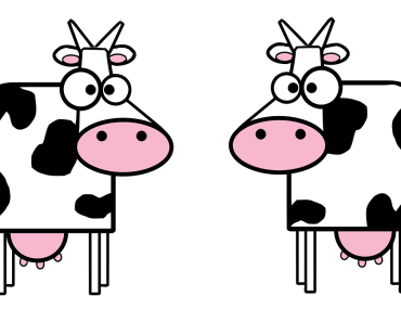 Cow Dairy Products