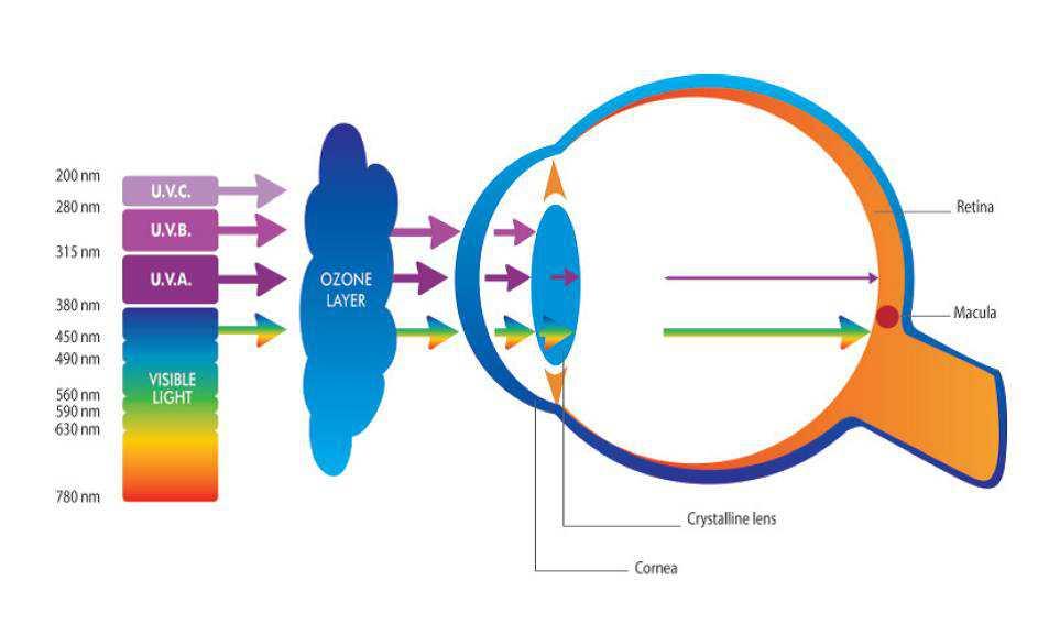 Dangerous Health Effect of LED & CLF Bulbs