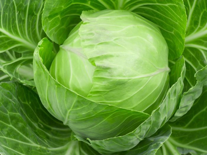 Cabbage ayurvedic supplements for weight loss