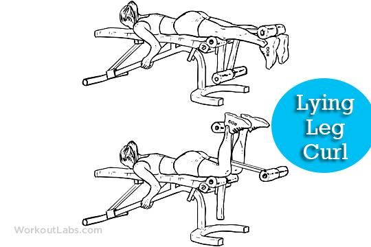 lying leg curls full body workout