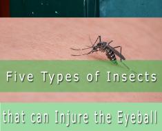 insects eyeballs
