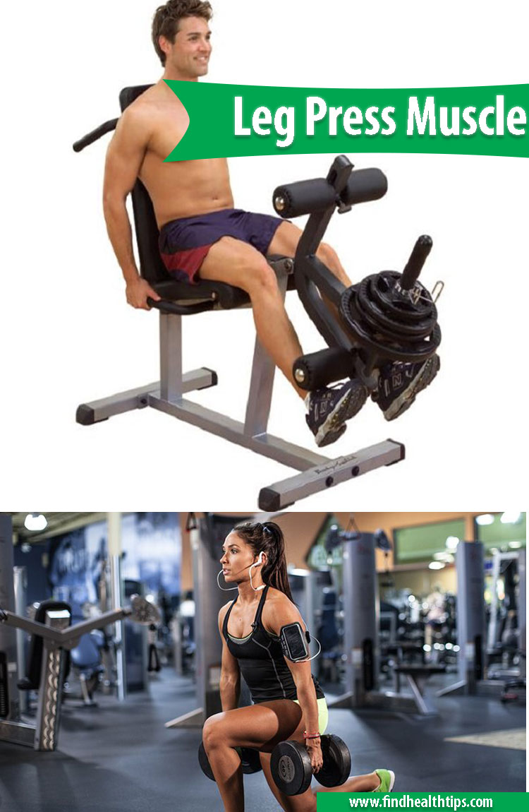 leg press muscle