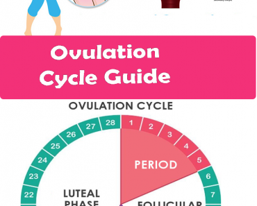 ovolution cycle guide