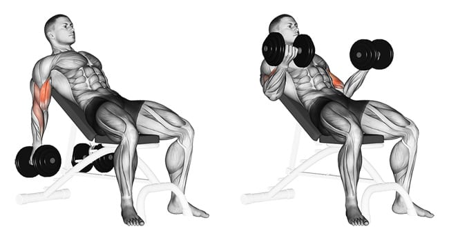 Incline dumbbell curls - Build Biceps Fast