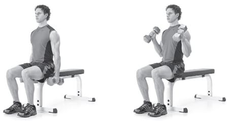 Seated Hammer Curls - Build Biceps Fast