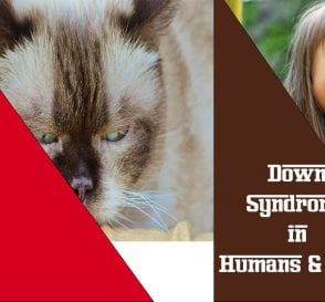Down Syndrome in Humans and cats