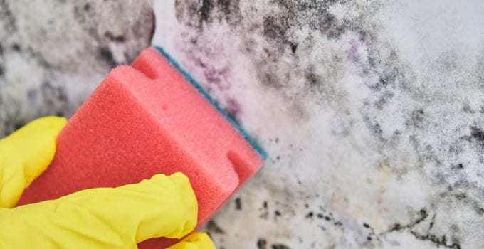 mould cleaning