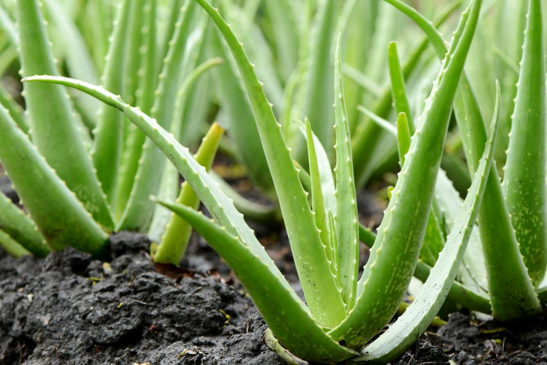 aloe vera - remove tan from arms instantly