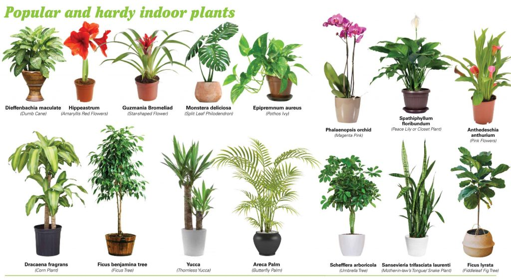 Which Indoor Plants Produces Most Oxygen? - Find Health Tips