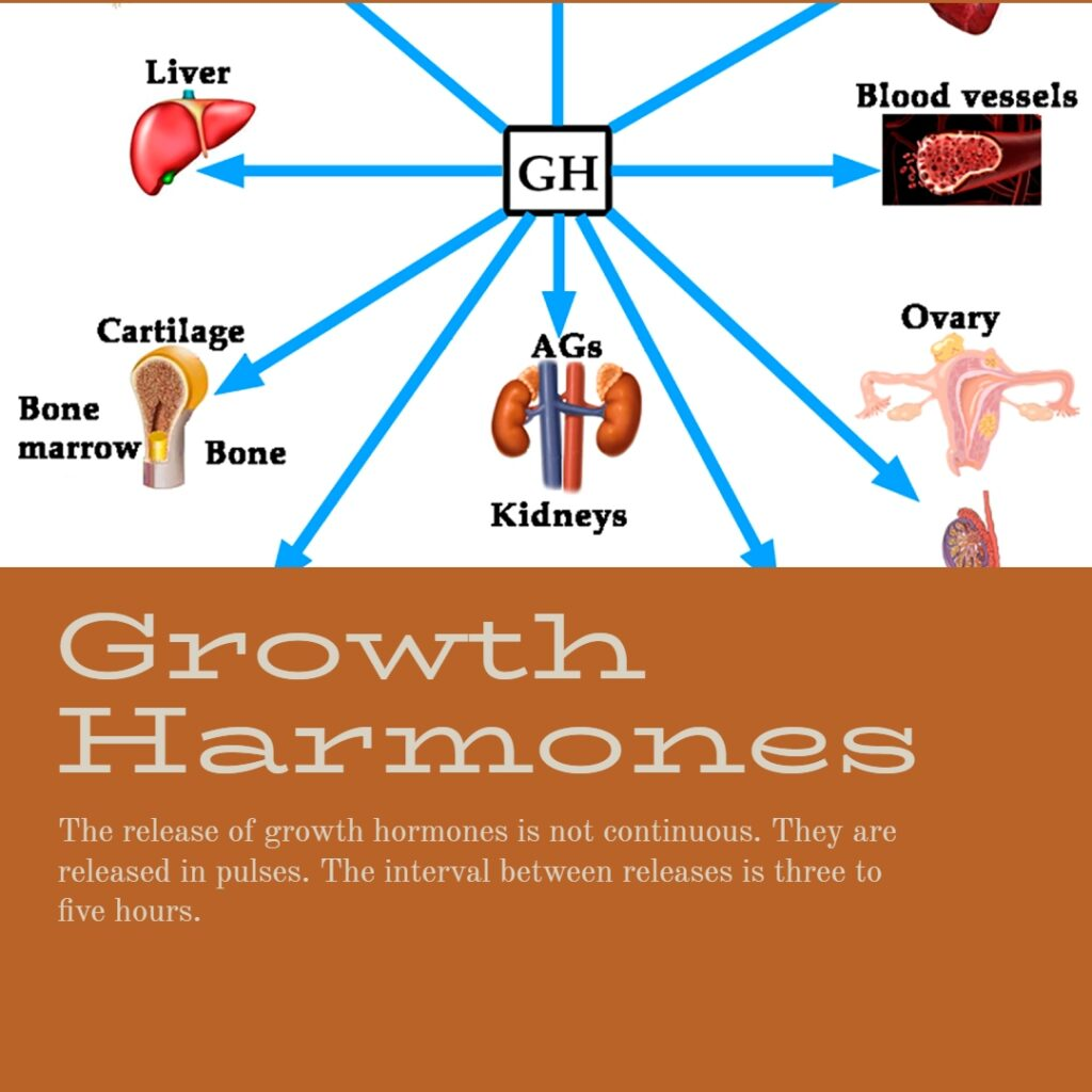 Growth Hormones - showing GH model here