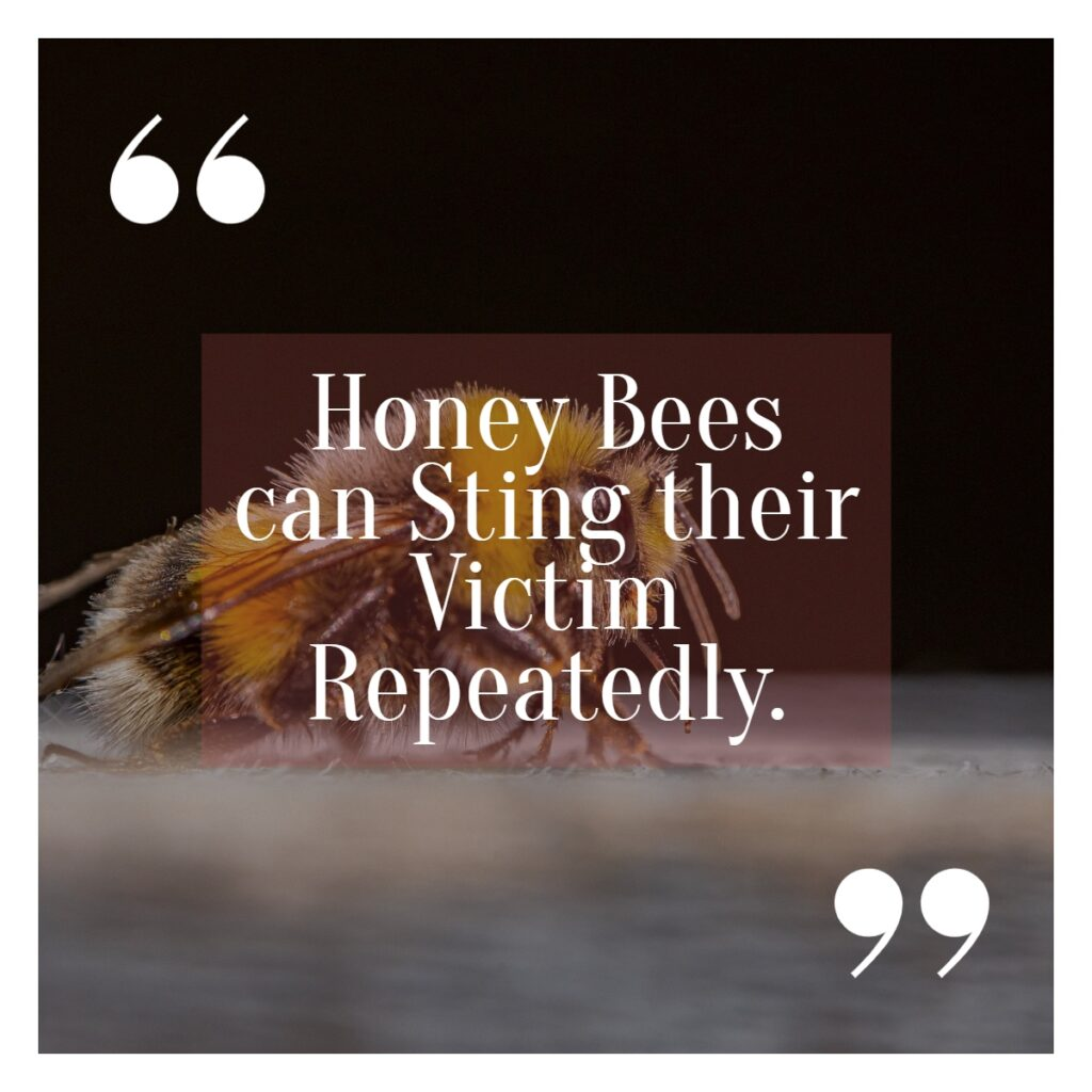 Honey Bees can sting their victim repeatedly fact written on the picture of Honey Bee