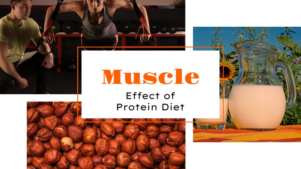 protein diet muscle