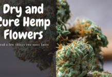dry and cure hemp flowers